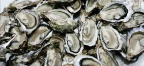 oysters_pile