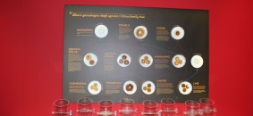 Albero genealogico agrumi